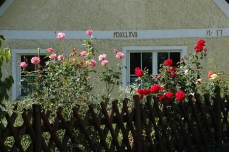 Farbenprächtige Rosen beim Meiselberg