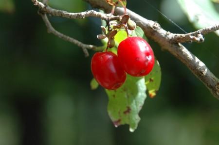 Dirndl-Rot, eine eigene Farbe