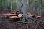 Die Waldliegen, eine geniale Idee