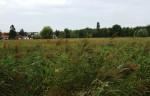 Feuchte Wiese südlich von Leopoldsdorf