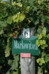 Die Rieden waren zumeist mit Winzer + Weinsorte beschriftet