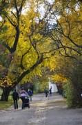 Ginko-Bäume im gelben Kleid