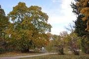 Links im Bild ein Maronibaum