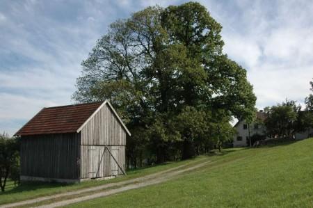 Naturdenkmal Maronibaum auf der Zehethofer Höhe
