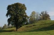Es gab mehrere dekorative Bäume in Einzelstellung entlang des Weges