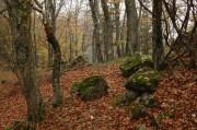 Bemoste Steine im Wald und viel viel Buchenlaub