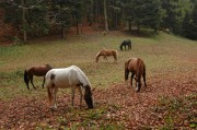 Laubnaschen - ganz vertiefte Pferde