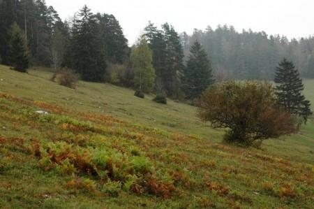 Farne und Waldrand oberhalb des Thalhofs