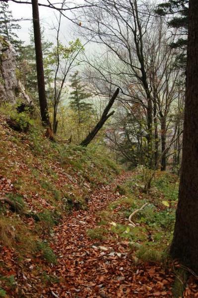 Das erste Wegstück ab der Warte - schmal, rutschig und ein wenig steil (was für geübte Wanderer und Bergsteiger)