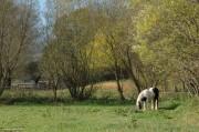Dieses Pferd hatte einen Zopf mit Gummiringerln