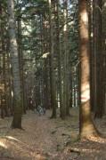 Ein hoher, dunkler Nadelwald