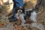 Auch Wanderer bringen Tiere mit - oberhalb des Felsanstieges am Weg zur Ruine Schrattenstein