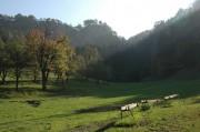 Blick vom Wildgehege in Schrattenbach zurück Richtung Ruine Schrattenstein