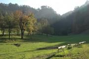 Die Burgfelsen beim Wildgehege in Schrattenbach