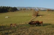 Am Weg von Schrattenbach nach Greith