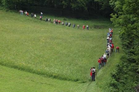 Im Mai 08: Orchideenwanderung auf den St. Veiter Staff