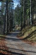 """Es hätte auch ein kleines Waldwegerl """"Zur Hochstraße"""" gegeben, wir gingen aber den Bahnwanderweg"""