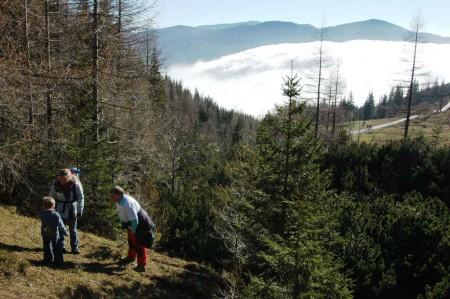 Am Beginn unserer Waldquerung zum Waxriegelhaus