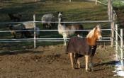 Dieses Pferdchen war nachmittags auch unterwegs