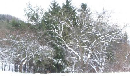 03_winter-am-gerichtsberg