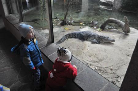 Bei den Krokodilen