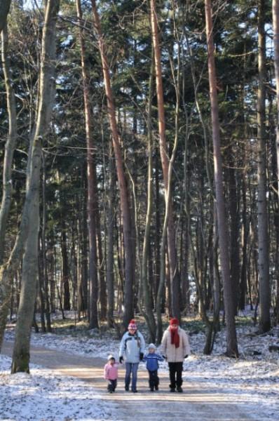 lindkogel_1495_20081230