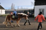 pferdereiten_501_20081221
