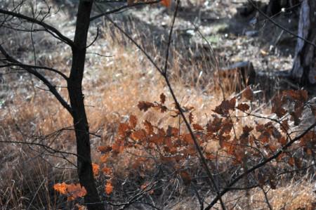 Grashalme und altes Eichenlaub zeigten warme Brauntöne