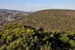 Auf dem Föhren-Hügel gleich gegenüber sind wir am 1.1.2009 gewandert