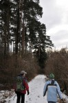 Im Karnabrunner Wald