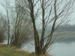 Neue Donau, Schwarzspecht