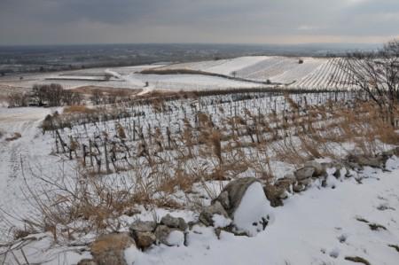 Blick über die Weingärten nach Süden