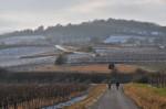 Bahn überquert - Blick zurück zum Eichkogel