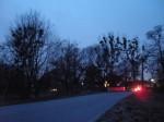 Misteln in den Bäumen und ein haltendes Auto