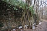 kurz vor der Ruine führte der Weg an dieser Mauer entlang