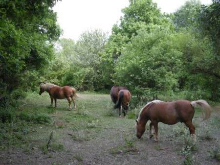 Pferde weiden neben der Straße