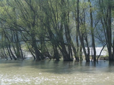Noch ganz schön viel Wasser in der Donau!