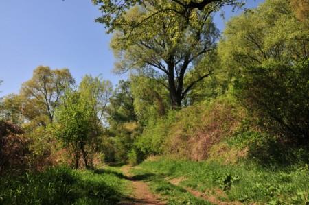 stopfenreuth_5328_20090419