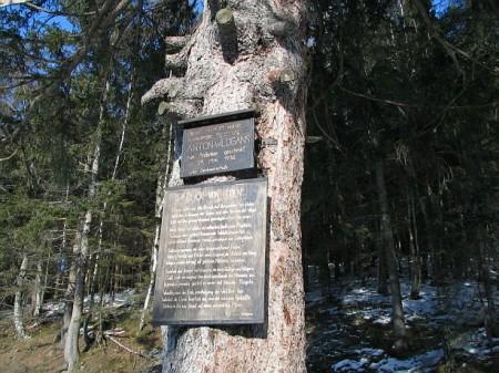 Der Wildgans-Baum (dem Dichter Anton Wildgans gewidmet)