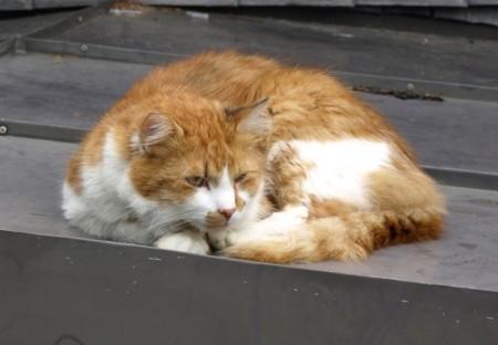 Katze bewacht die Hütte