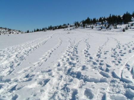 Viele Spuren im Schnee!