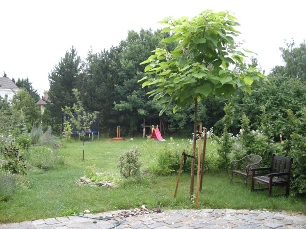 Der familien wanderblog mauer maronibaum tulpenbaum stockmalven feuerbohnen co - Windsegel garten ...