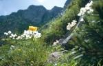 bb-bergblumen-hochkar-web