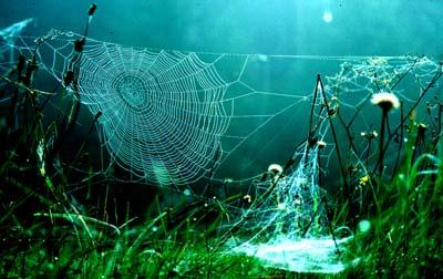 bb-altweibersommer-web
