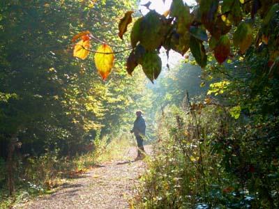bb-herbstlicher-nationalparkweg-web