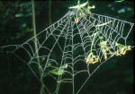 bb-spinnennetz-im-morgentau-web2