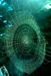 bb-spinnennetz-web
