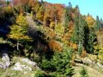 Herbstwald Mitte Oktober