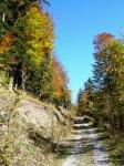 Forststraße zwischen Ebenbaueralm und Lackenkogel