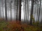 Waldrand mit Herbstgras